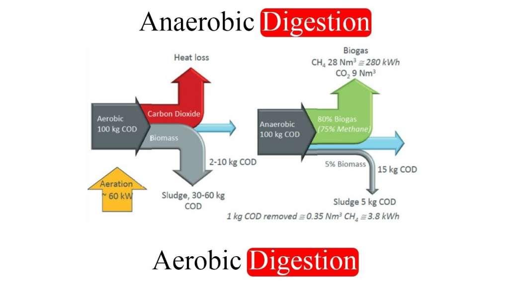 calorias metabolismo basal cura